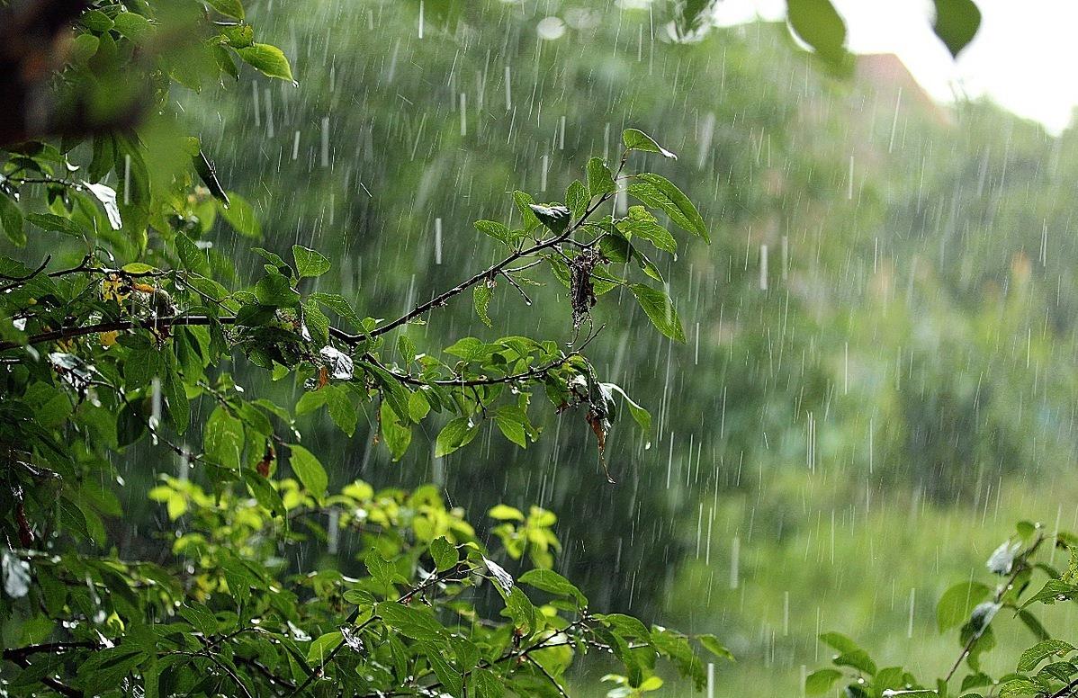 картинки на тему дождь в лесу минусы сортов груш